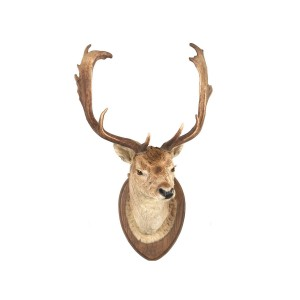 Deer head wall sticker, John Lewis, £19
