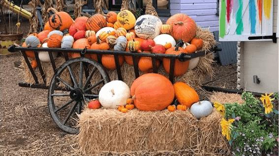 6 Fun Family Activities for Autumn Half Term